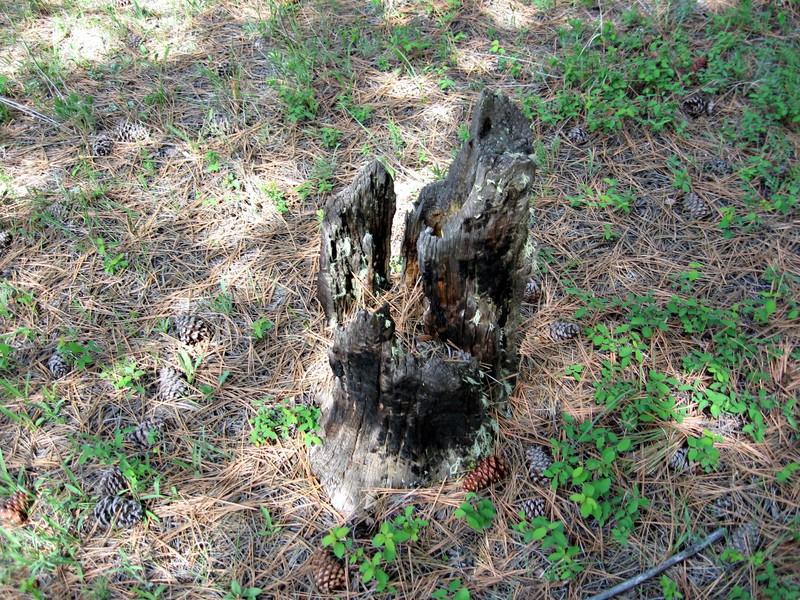 Stump5