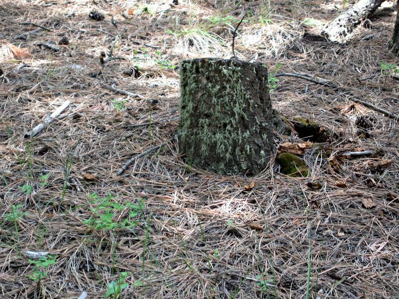Stump8