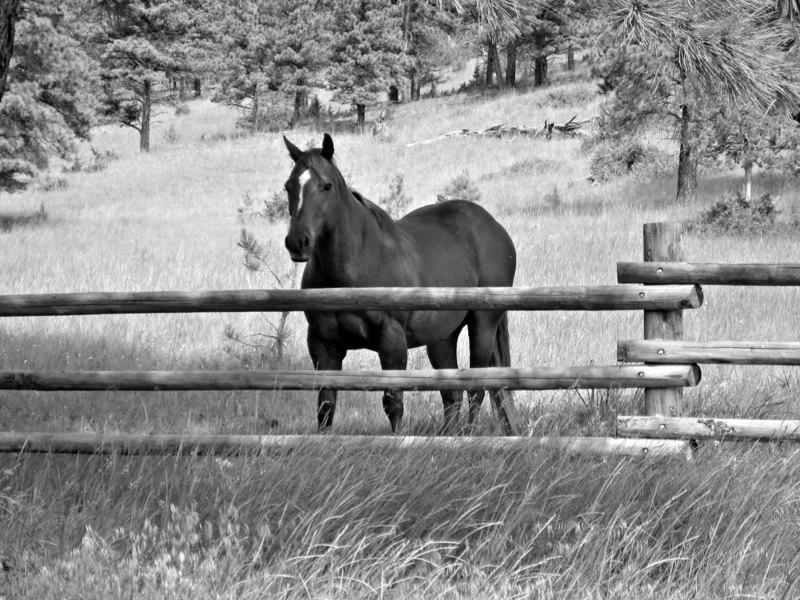 Horseandfence