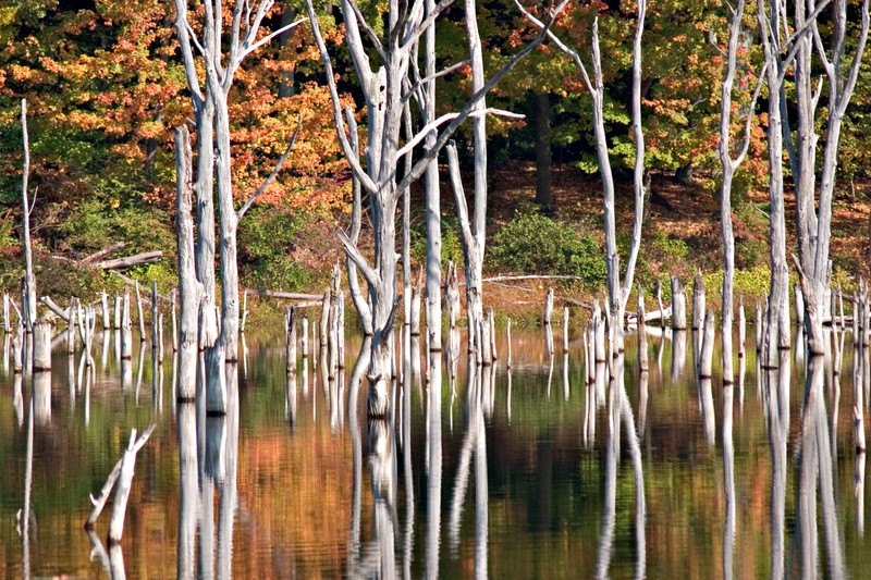 Watertrees