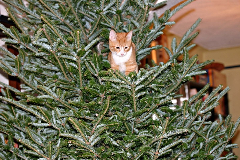 Treecat_2