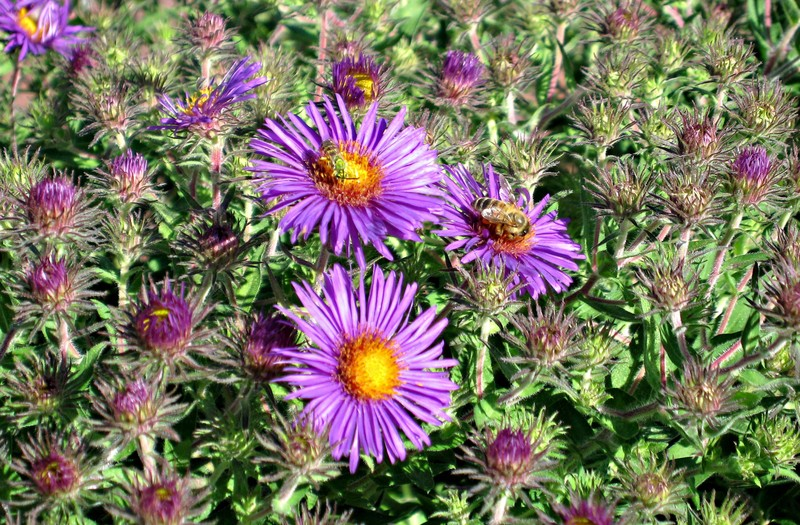 Beesandflowers
